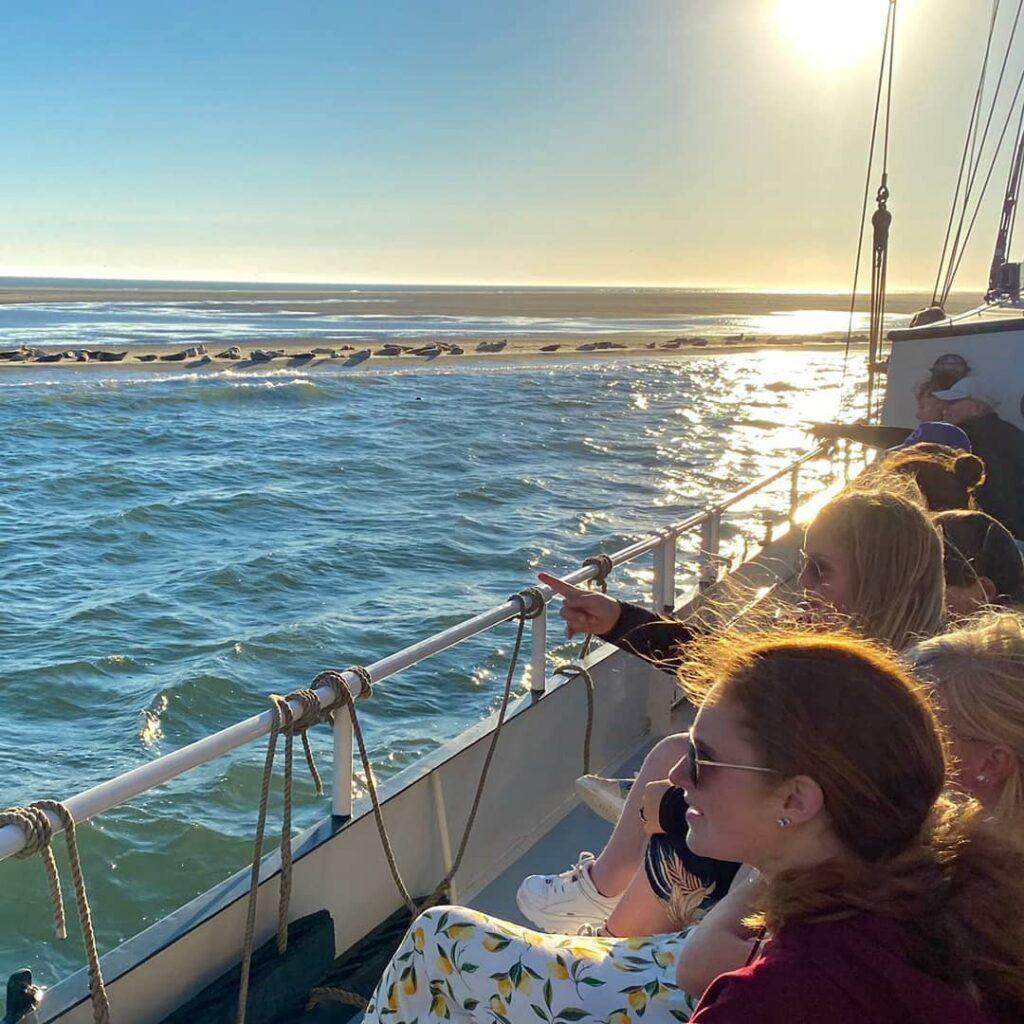 zeehonden bezoeken terschelling