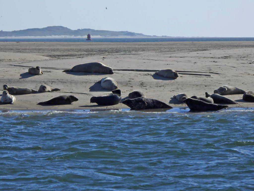 tocht naar de zeehonden bank
